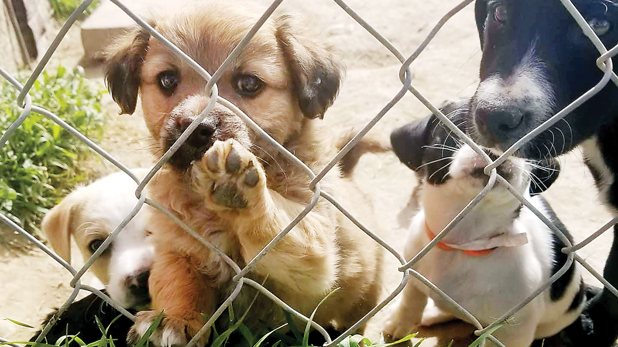 Ontario-area shelter seeks help as dog kennels fill up