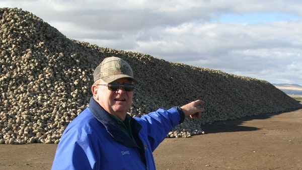 Doug Maag of Y-1 Farms accumulated a mountain of sugar beets from a strong harvest.