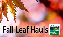 Keep leaves out of streets & storm drains.